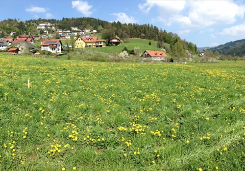 Bärnbach: Traumhafte Baugründe am Moosweg